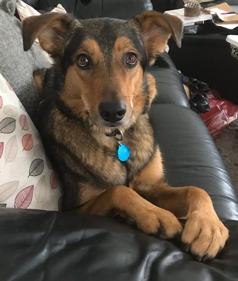 Archie - success story from Spirit of the Dog